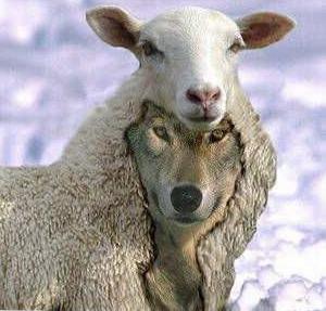 mouton-loup