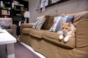 chat sur un canapé ikéa a Wembley mother london