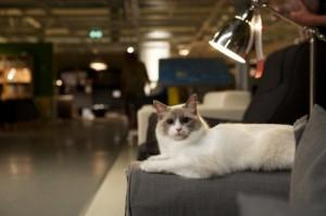 chat sur canapé ikea wembley mother london