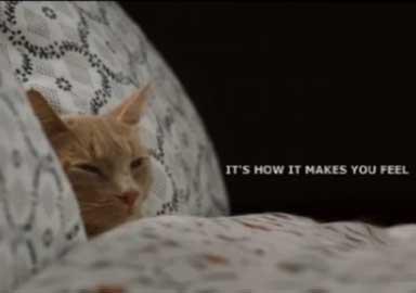 chat ikea signature endormi