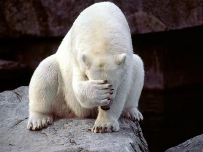 ours polaire qui se cache